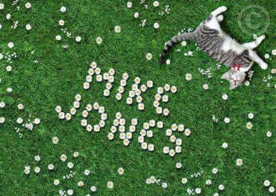 Daisies & Cat