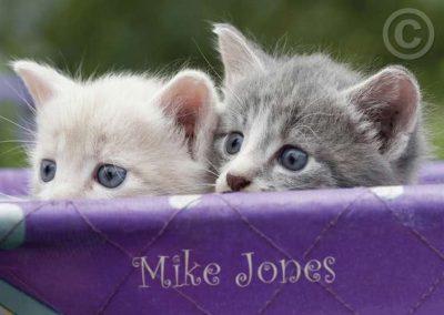 Peeking Kittens
