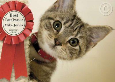 Kitten Winner