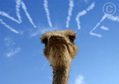 Ostrich_A_MIke